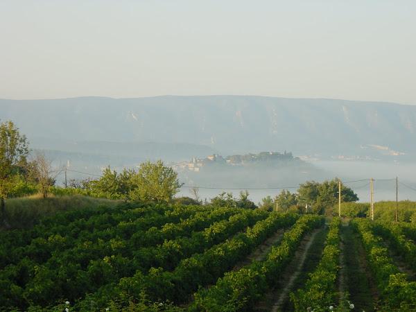 Photo number 34 of Les Vignes