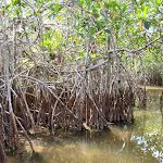 2013_04_19_Everglades_Flamingo