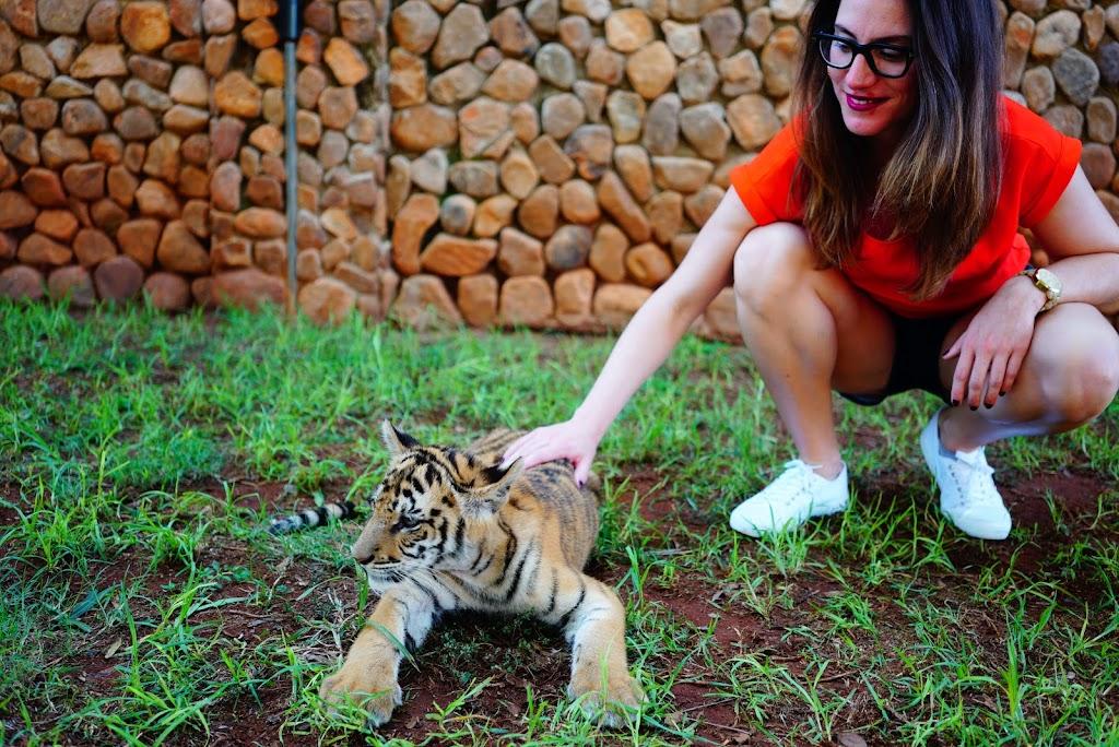 baby tiger in Ukutula
