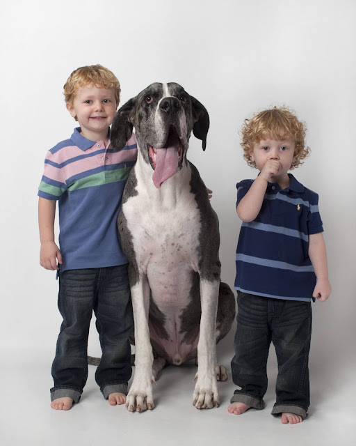 Dynamite Danes Family Album #3 - Brody%2Band%2BGriffin%2B083.jpg
