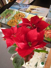 My Poinsettia 01