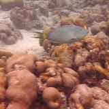 Bonaire 2011 - PICT0064.JPG