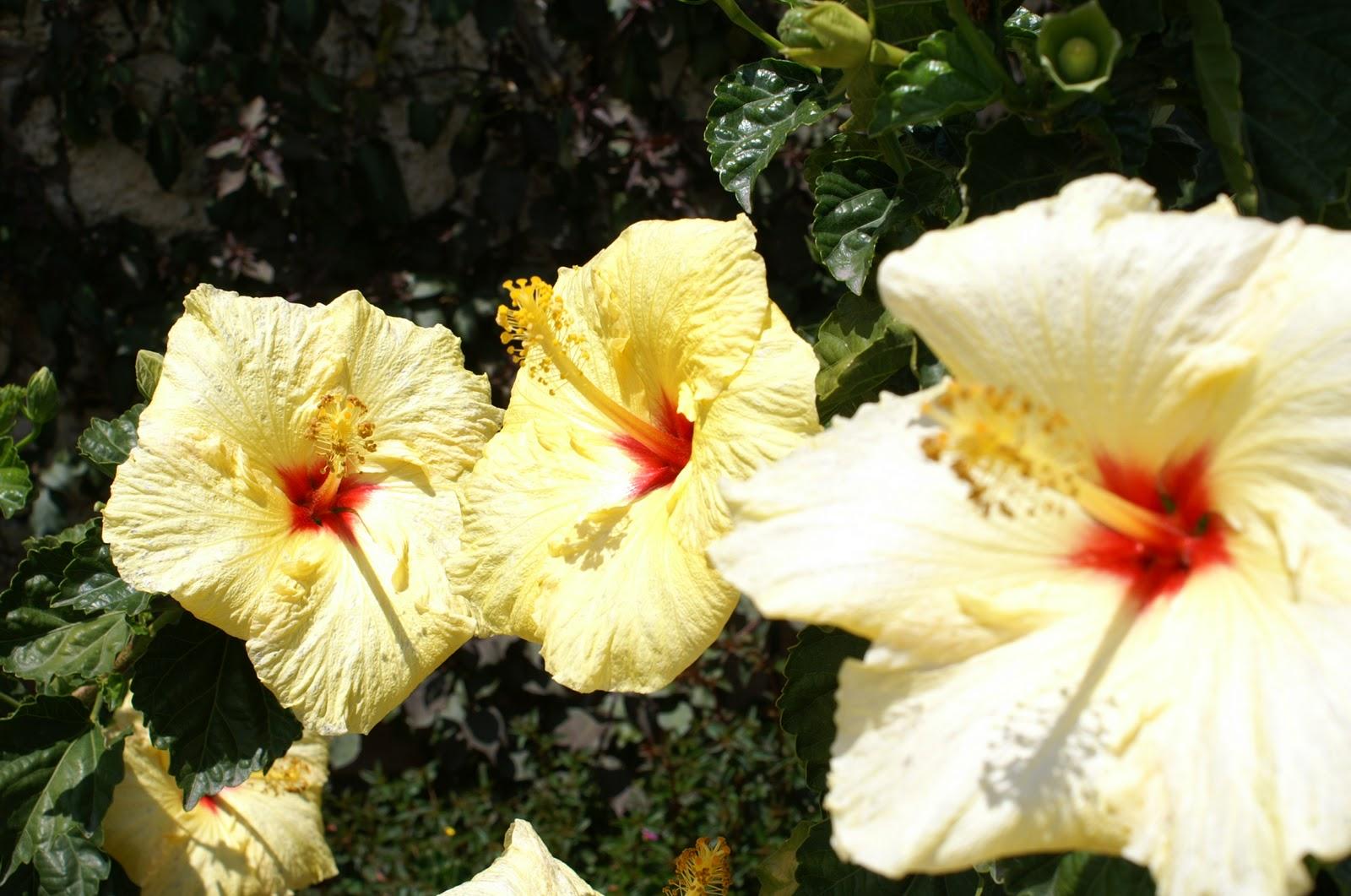 Paipa flowers