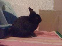 [adopté] Mica, lapin noir Mica1-3ef9a