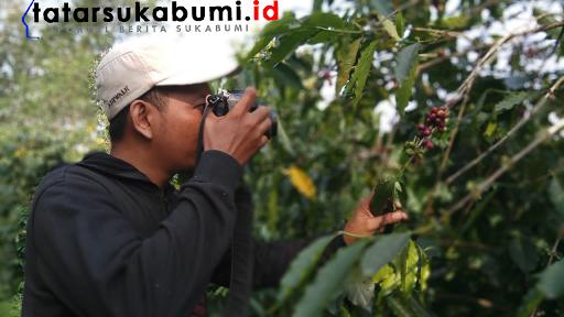 Petani Kopi Sukabumi Berharap Musim Kemarau 2018 Segera Usai