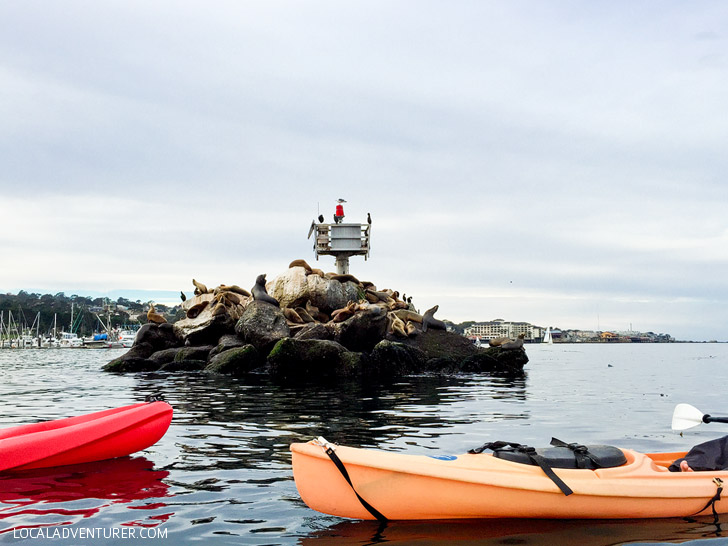 Spotting California Sea Lions at Coast Guard Pier Monterey.