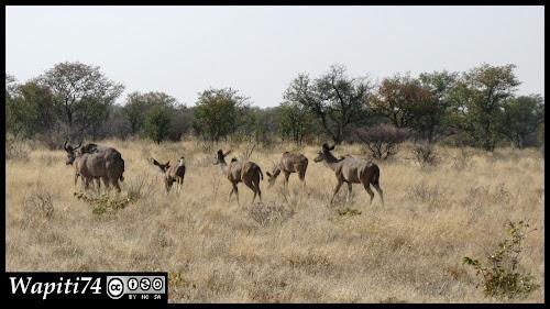 Balade australe... 11 jours en Namibie IMG_0360