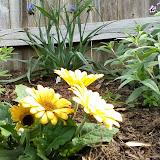 Gardening 2014 - 0405102645.jpg
