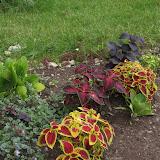 Brilliant правый дальний зеленый с белым центром, Violet Tricolor' - в центре. Dark Star-коричневый, Wisard Scarlet - желто-красный