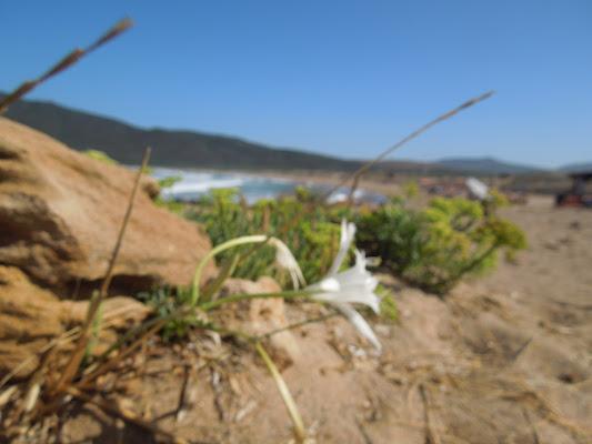 Bellezza tra le dune di Agocentrico