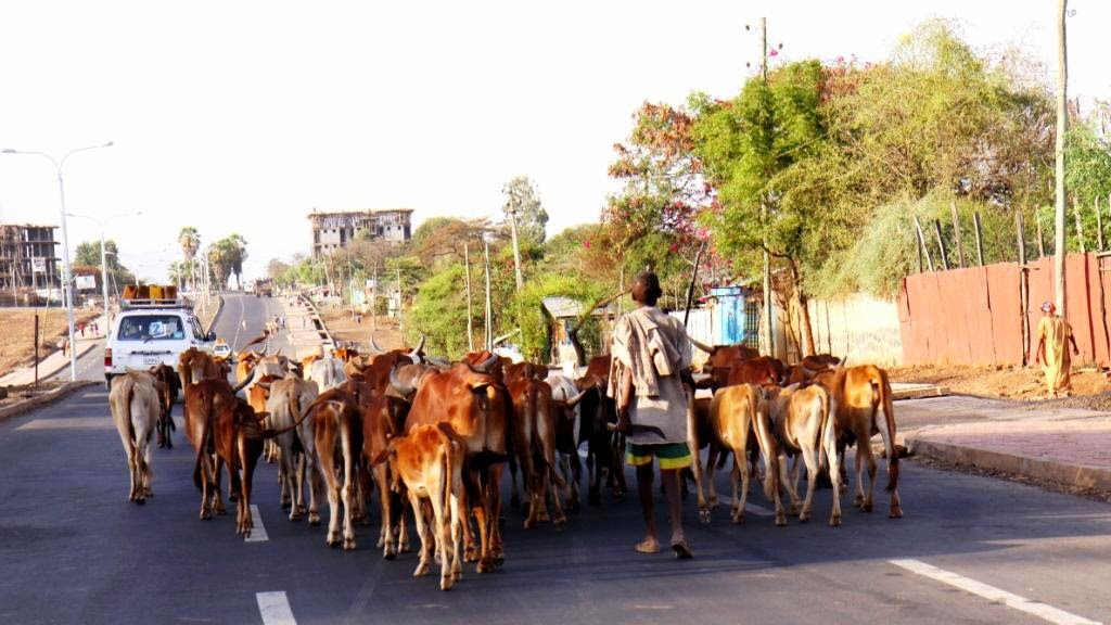 Kelionė į Etiopiją.Addis Abebos gatvės. Autorius Tomas Baltušis