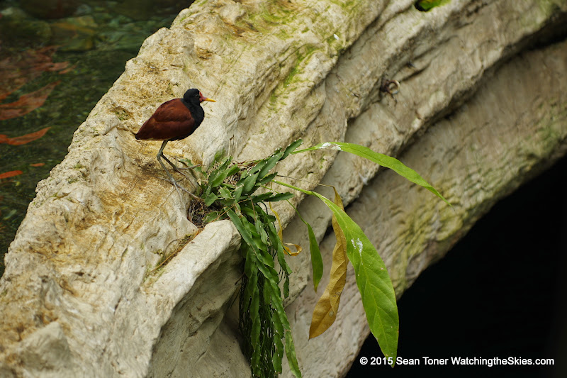 03-11-15 Dallas World Aquarium - _IMG1024.JPG