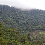Entre Nanegalito et Nono, 2400 m (Pichincha, Équateur), 12 décembre 2013. Photo : J.-M. Gayman