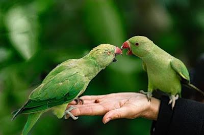 तोता के बारे में जानकारी   48 Interesting Facts About In Parrot In Hindi - anokhagyan.in