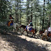 Horse ride at Naldehra.jpg