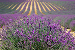 4 Types of flower gardening