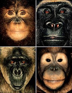 species simpanse