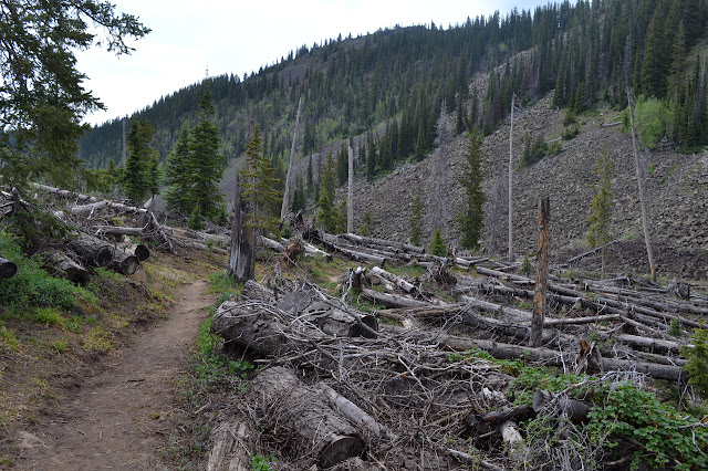 many fallen trees