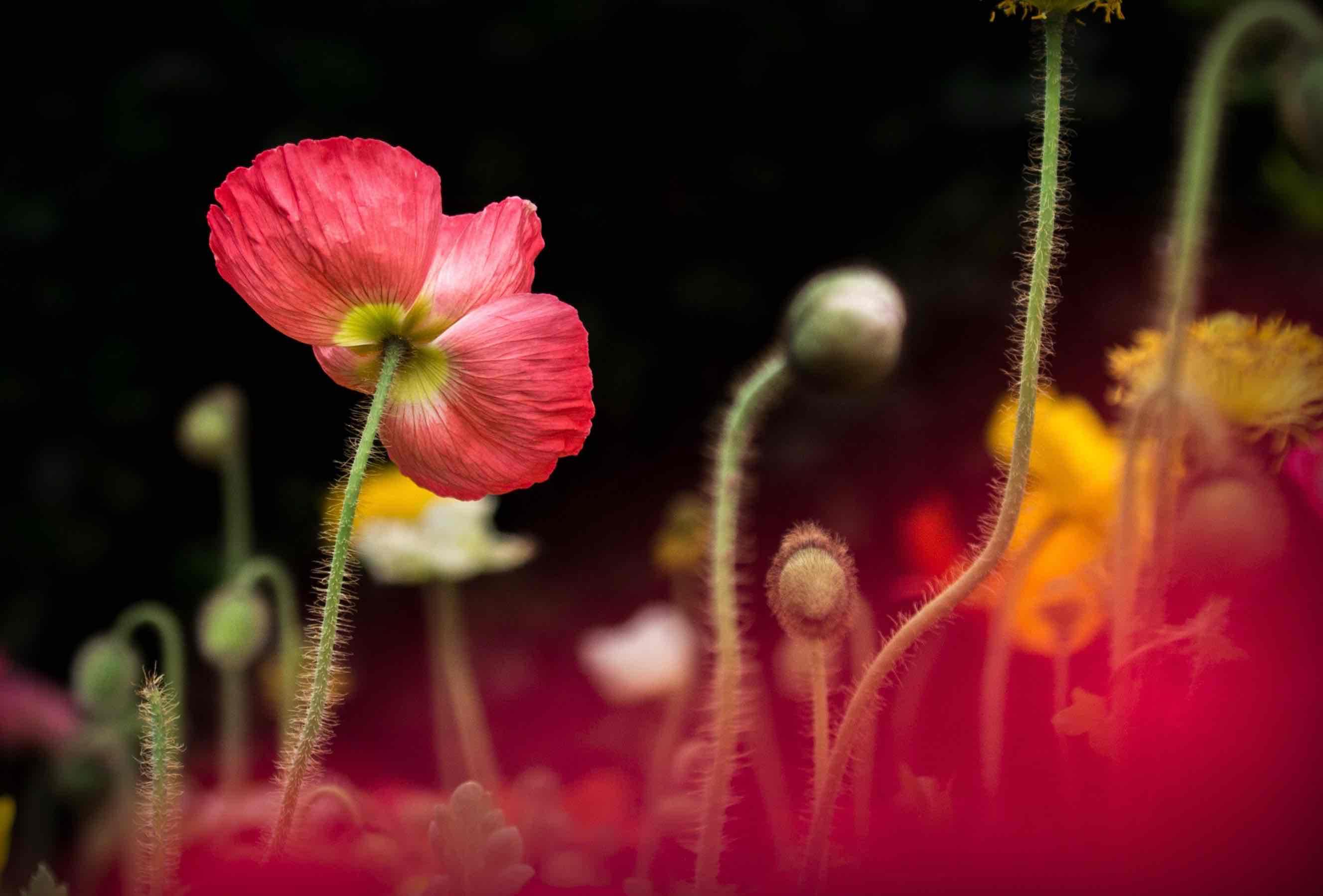 Imagenes muy lindas de flores5