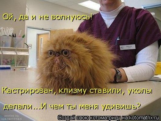 1453540554_kotomatricy-27