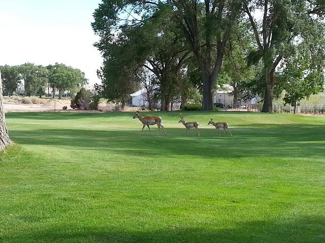 Kirtland New Mexico