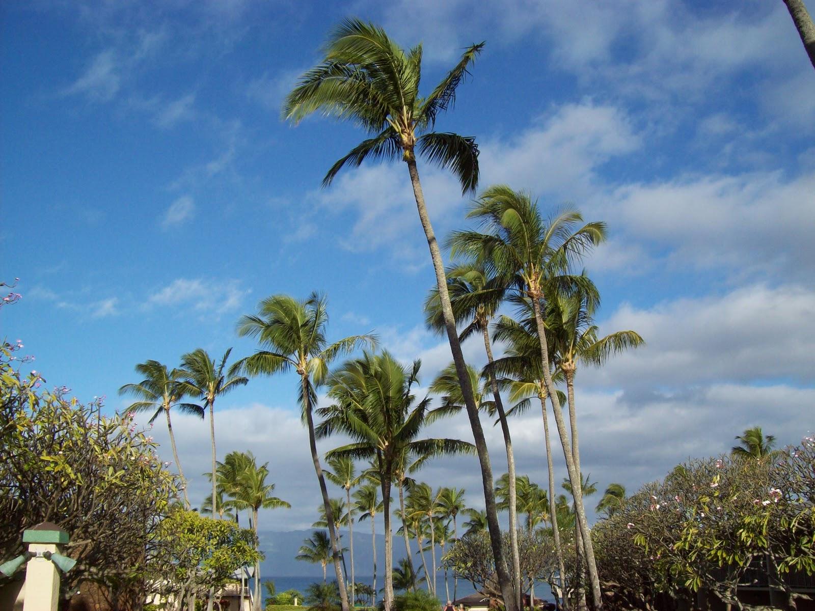 Hawaii Day 6 - 100_7573.JPG