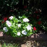 Gardening 2010, Part Three - 101_4458.JPG