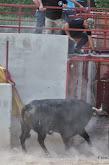 045-peña taurina linares 2014 130.JPG