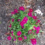 Gardening 2010 - 101_1768.JPG