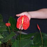 Cultivo de plantas de interior. - 100_0837.JPG