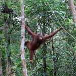 Borneo, Malezija