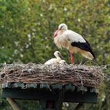 Vogels en dieren - IMG_7258.JPG