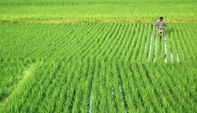 दो साल में 12227 किसानों ने की आत्महत्या, सबसे ज्यादा महाराष्ट्र में, जानिए अन्य राज्यों का हाल -