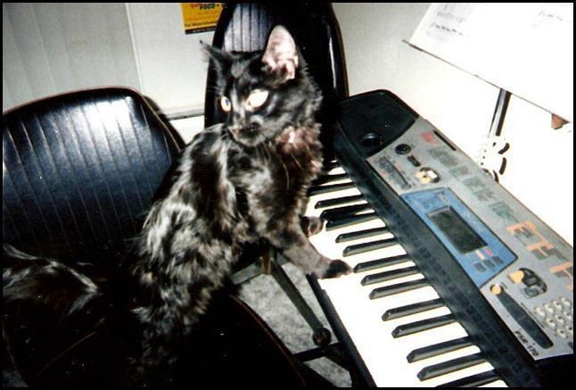 Onyx kitten piano