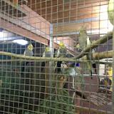 Vollmond im Tierheim