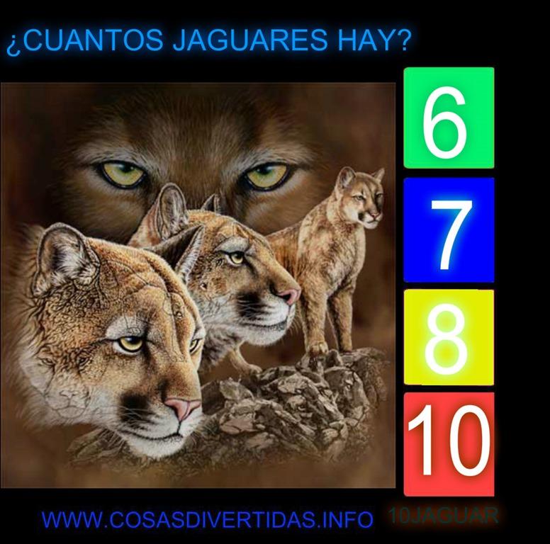[jaguars%5B2%5D]
