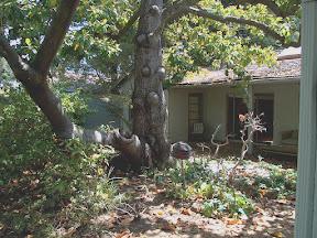 Backyard of 3885 Magnolia