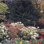 images-Seed and Sod-trees_c10.jpg