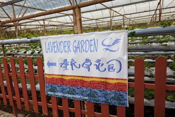 banner lavender garden
