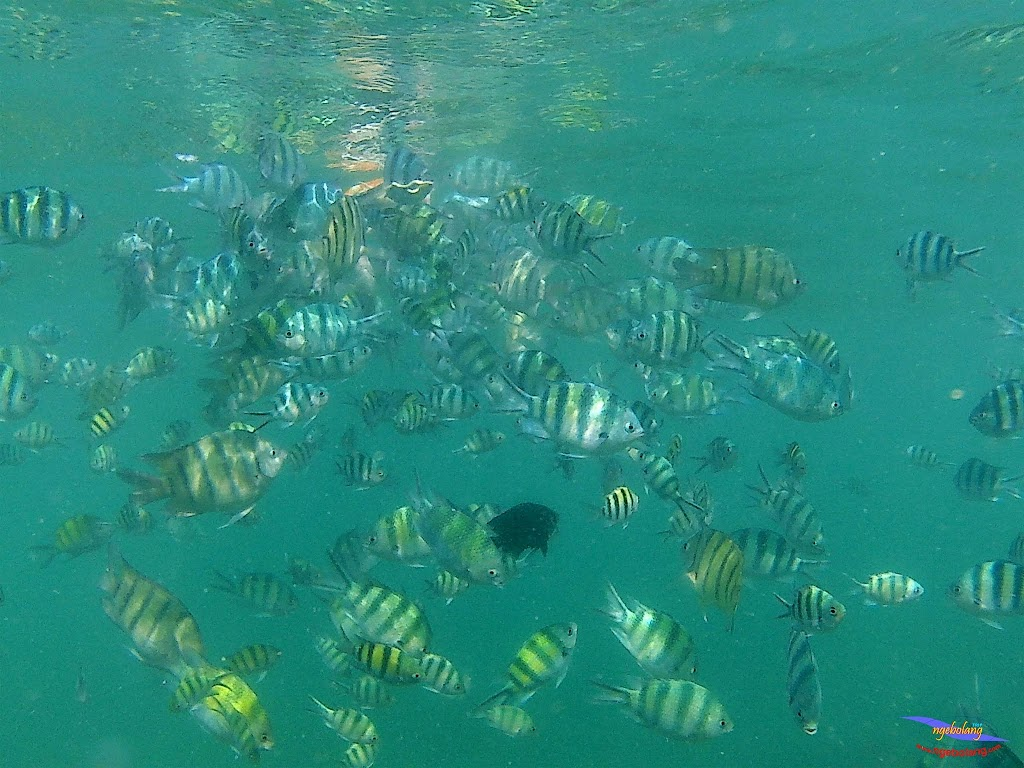 family trip pulau pari 140716 GoPro 58