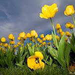 Flower 040_1280px.jpg