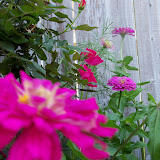 Gardening 2012 - 115_2403.JPG