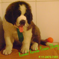 KENNEL VEREDA PRINCE DLUMY contact information