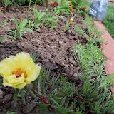 Gardening 2010 - 101_1449.JPG