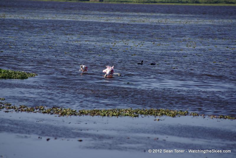 04-06-12 Myaka River State Park - IMGP4467.JPG