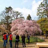 2014 Japan - Dag 10 - tom-SAM_0566-0014.JPG