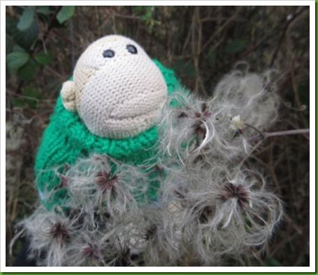 Fluffy bush