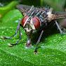 Fotowedstrijd biodiversiteit