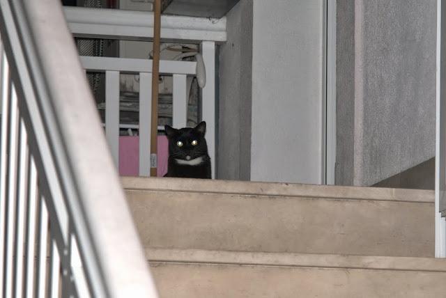 Эта хорватская кошка ни разу не пошевелилась и не моргнула за 10 минут!