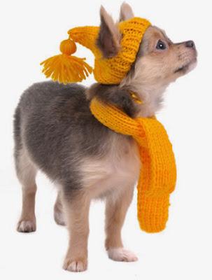 Accesorios para perros de raza peque a accesorios para for Accesorios para mascotas